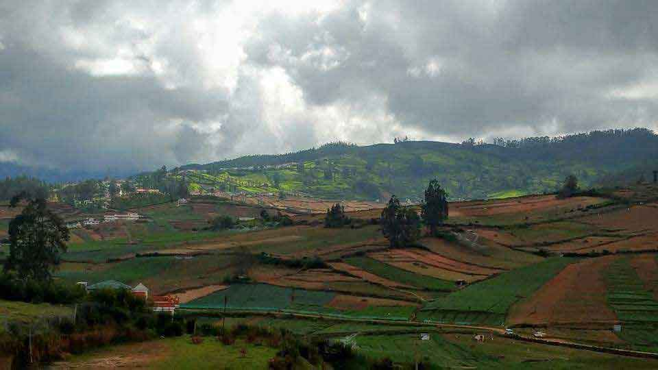 group stays in ooty