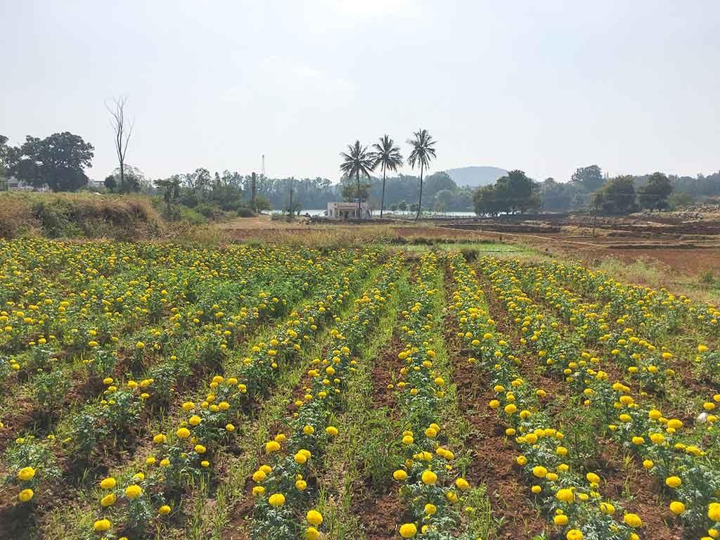 anu-garden-farm-house-yelagiri